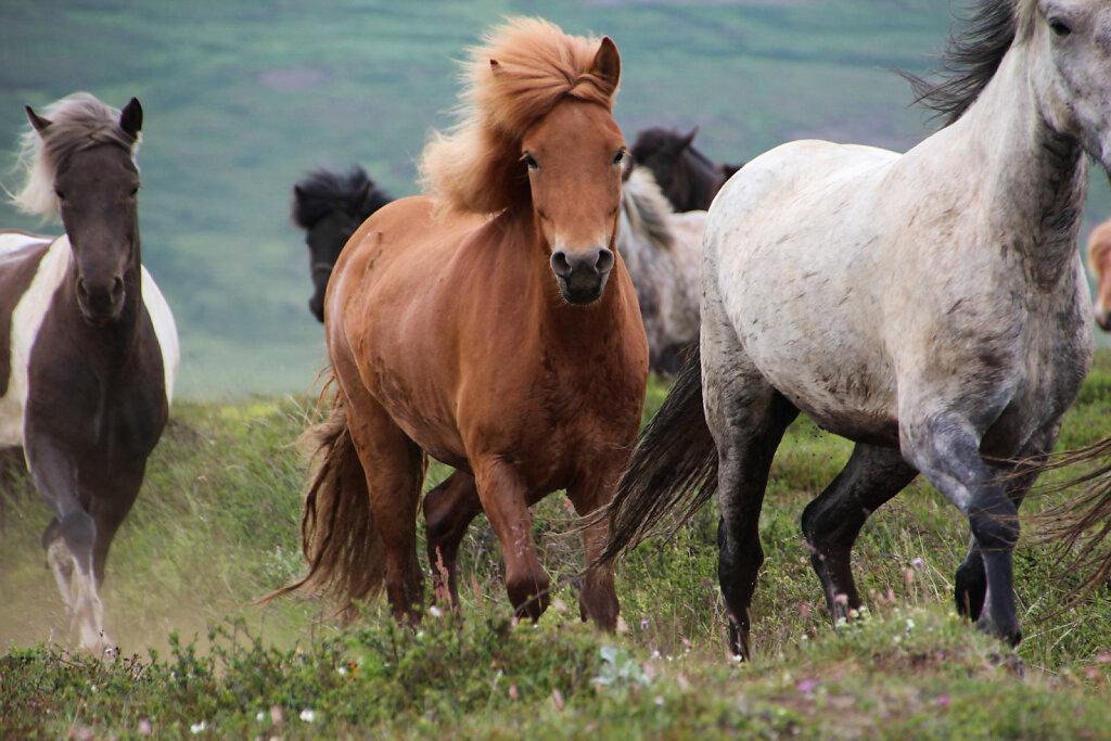 Pferde-5.jpg