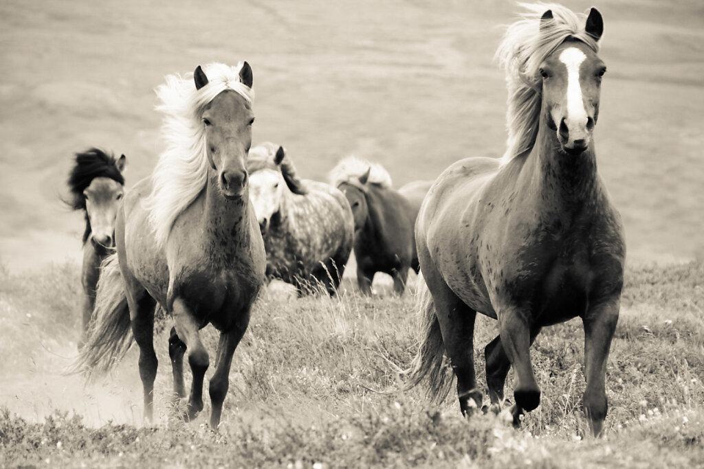 Pferde-6.jpg