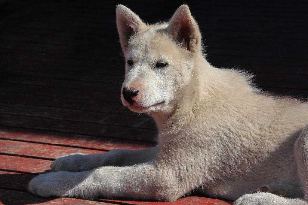 Hunde-11.jpg