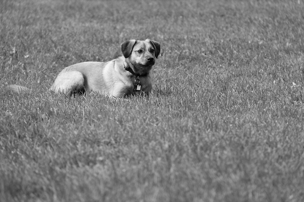 Hunde-23.jpg