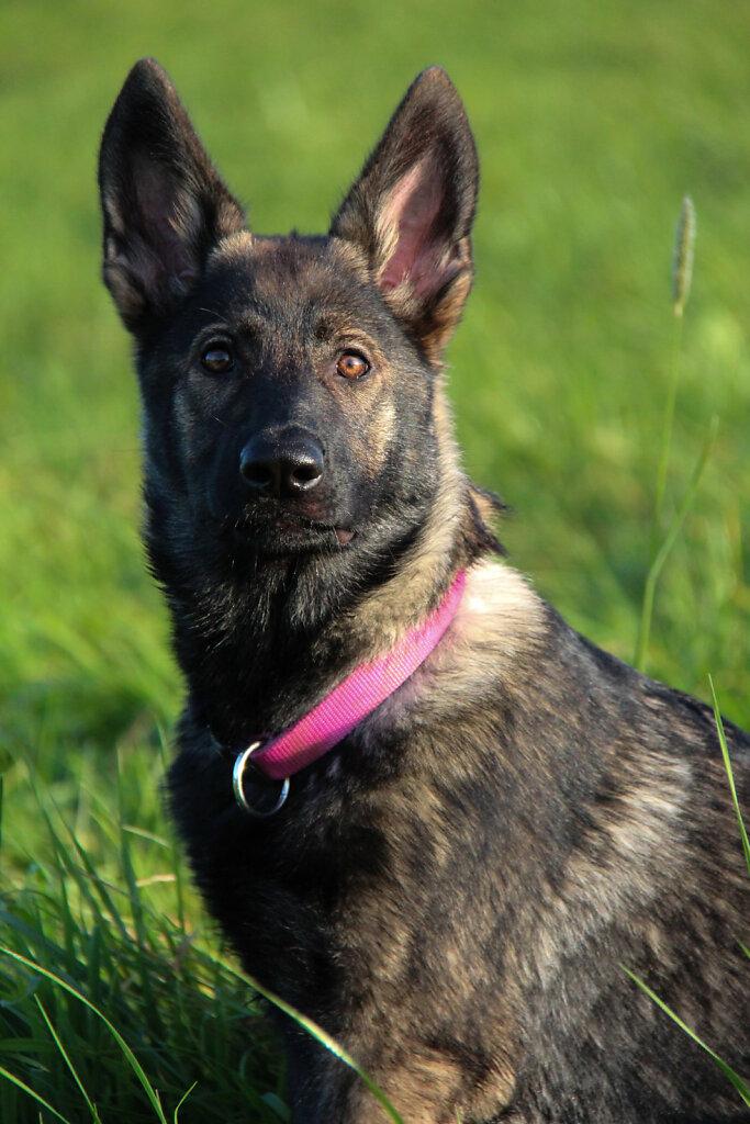 Hunde-24.jpg