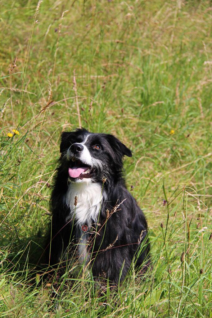 Hunde-29.jpg