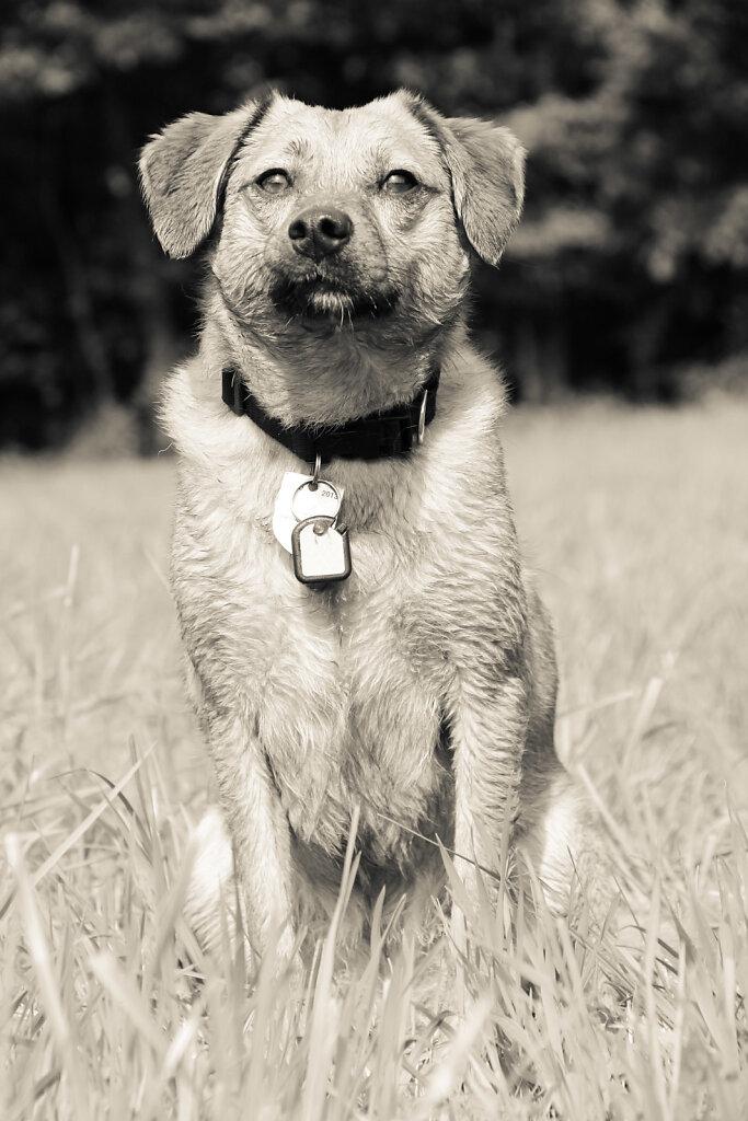 Hunde-30.jpg