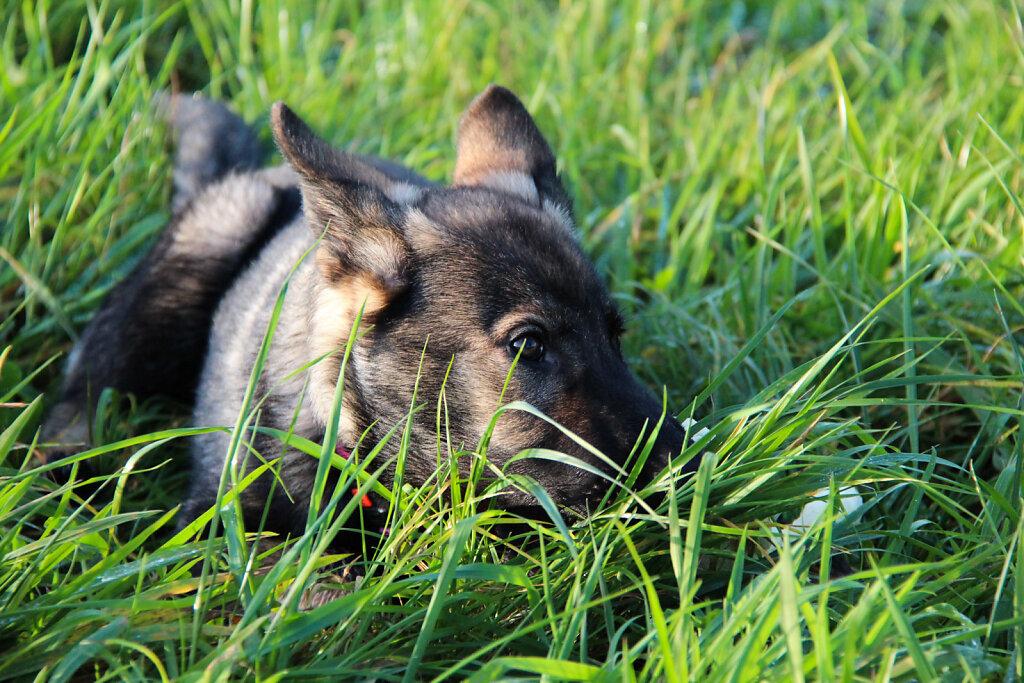 Hunde-33.jpg